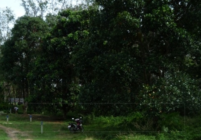 Land for Sale in Rawai